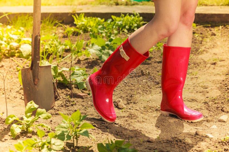Pés da mulher que vestem botas de borracha vermelhas no jardim fotos de stock royalty free