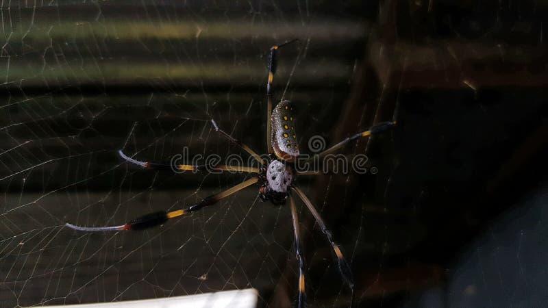 Pés da obscuridade da Web do crânio da aranha fotos de stock