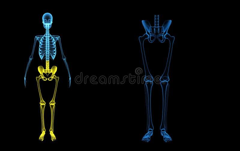 Pés de esqueleto fotos de stock