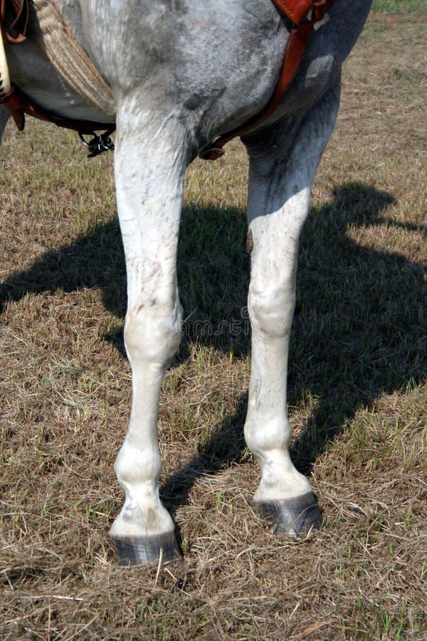 Pés do cavalo foto de stock royalty free