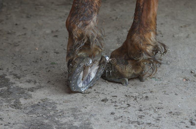 Pés do cavalo imagens de stock