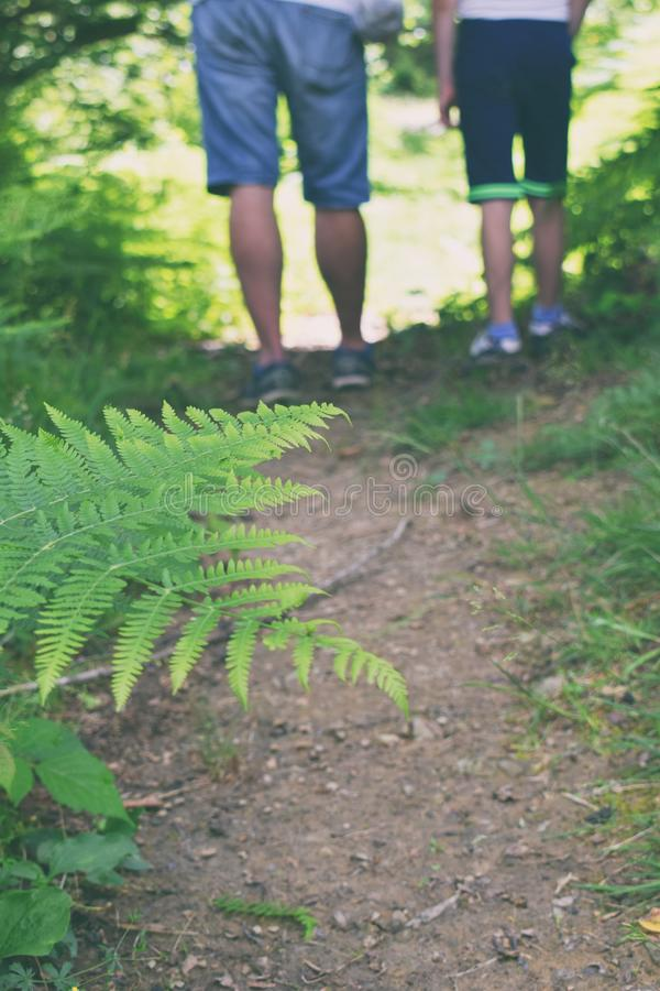 Pés do homem e da criança que caminham na natureza Pai e filho que andam ao longo do trajeto de floresta Conceito do lazer, do pa foto de stock