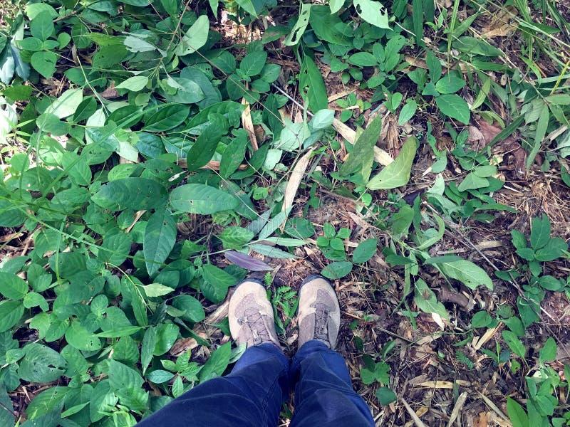 Pés e pés fêmeas na calças de ganga e nas sapatilhas marrons que estão com base na floresta da região selvagem com arbusto e o re imagens de stock royalty free