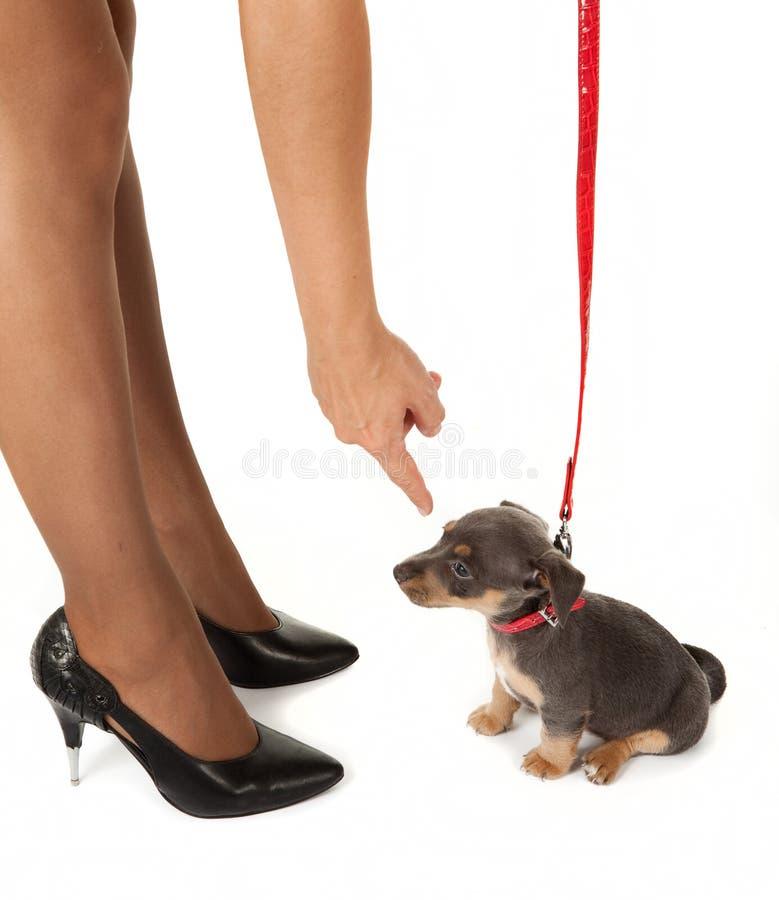 Pés e filhote de cachorro foto de stock