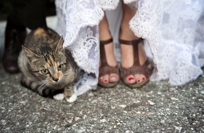 Pés e gato da noiva fotografia de stock royalty free