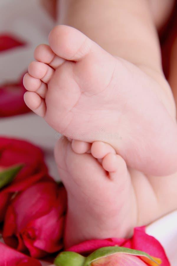 Pés e rosas do bebê imagem de stock