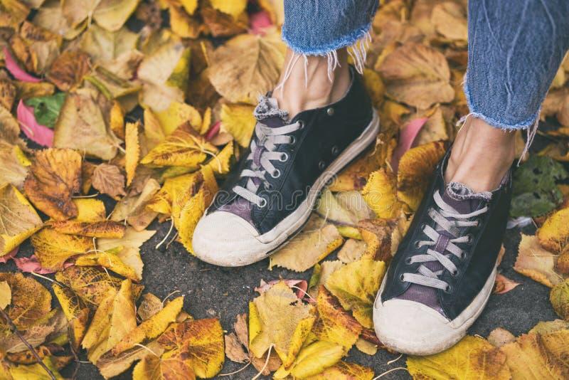 Pés nas sapatilhas nas folhas caídas amarelas foto de stock