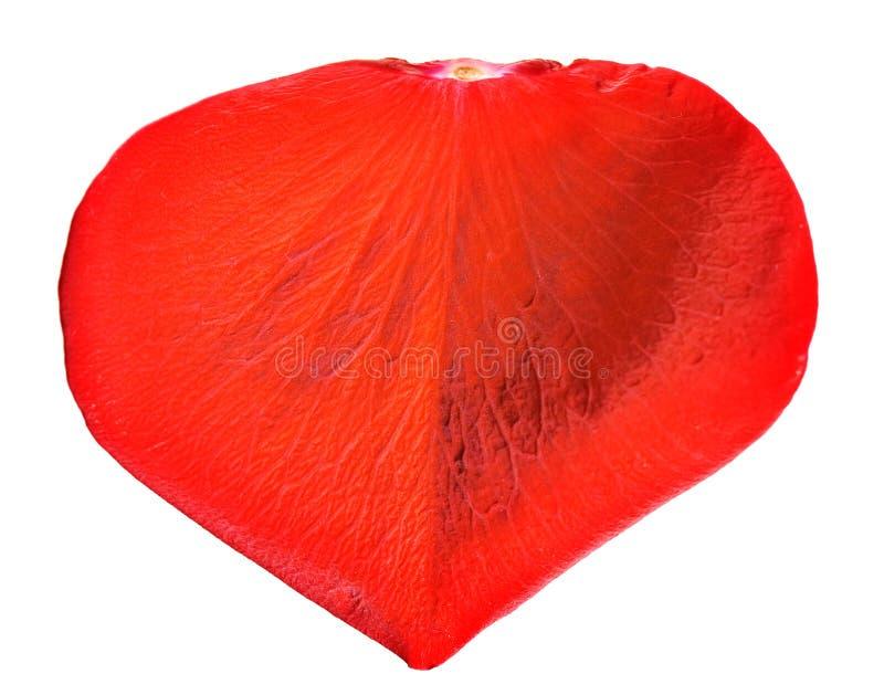Pétala cor-de-rosa vermelha foto de stock royalty free