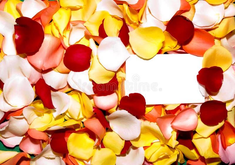 Pétala de Rosa 2 de cumprimento fotografia de stock royalty free