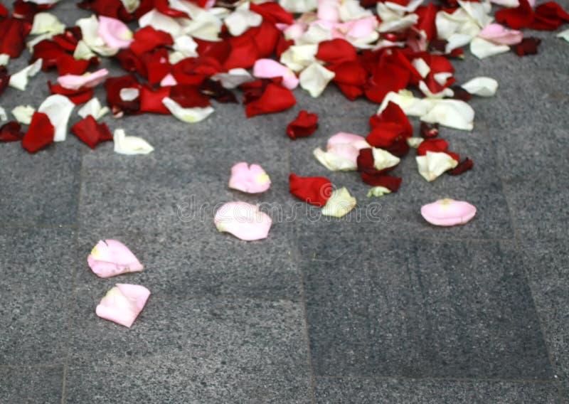 Pétalas cor-de-rosa brancas e vermelhas no asfalto foto de stock royalty free