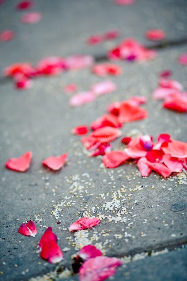 Pétalas cor-de-rosa caídas fotografia de stock royalty free