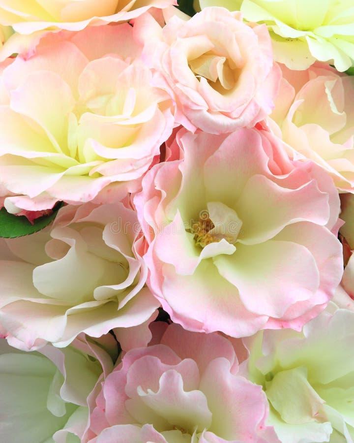 Pétalas cor-de-rosa cor-de-rosa imagens de stock royalty free