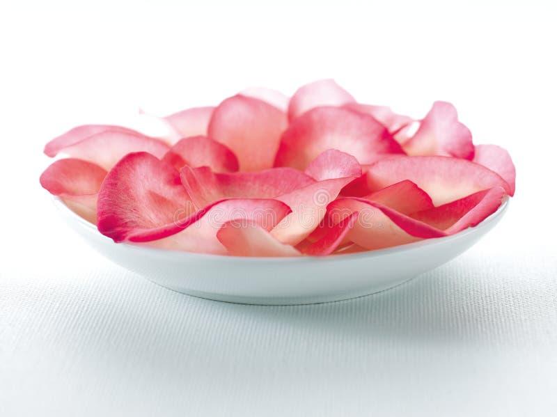 Pétalas cor-de-rosa cor-de-rosa na bacia cerâmica branca imagem de stock