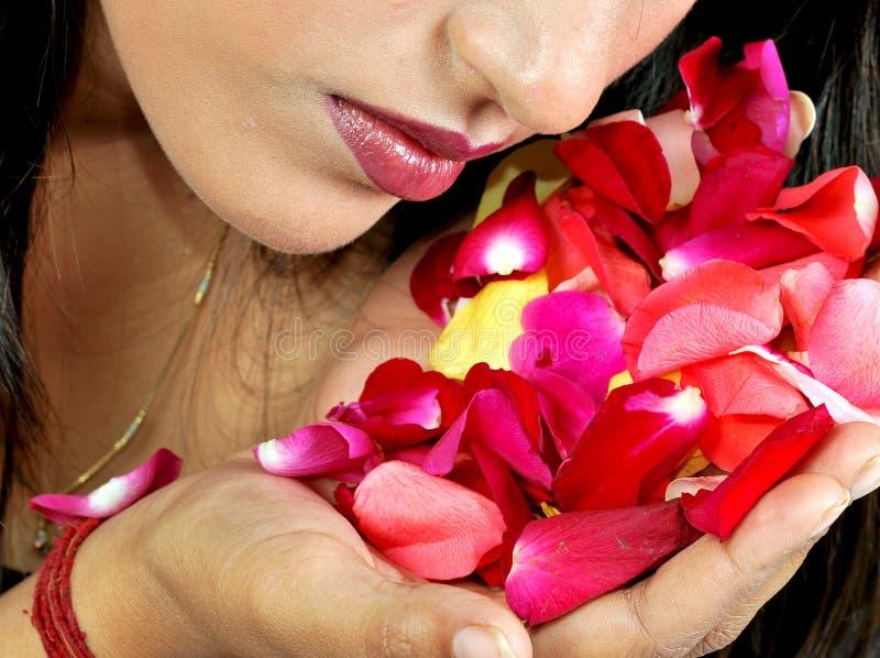 Pétalas da flor foto de stock royalty free