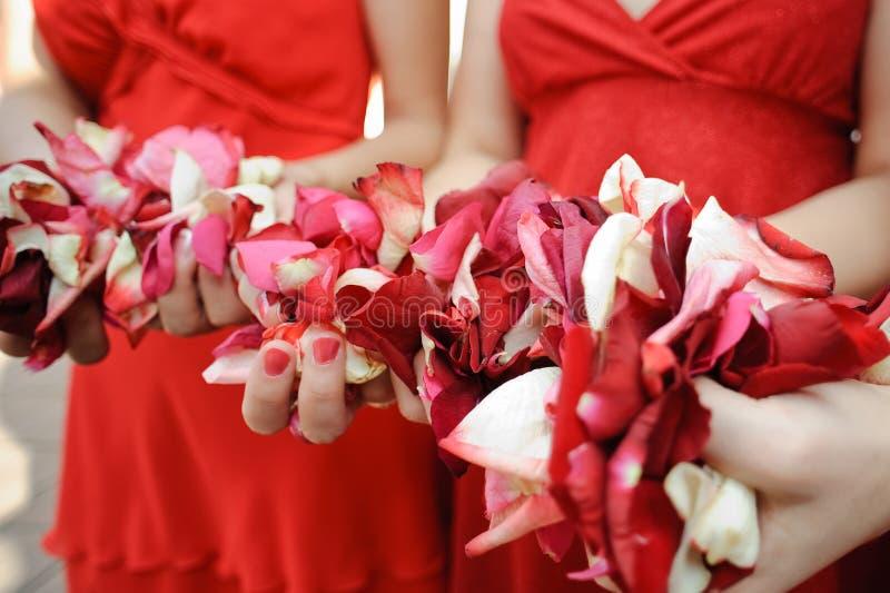 Pétalas da flor nas mãos dos povos fotos de stock royalty free