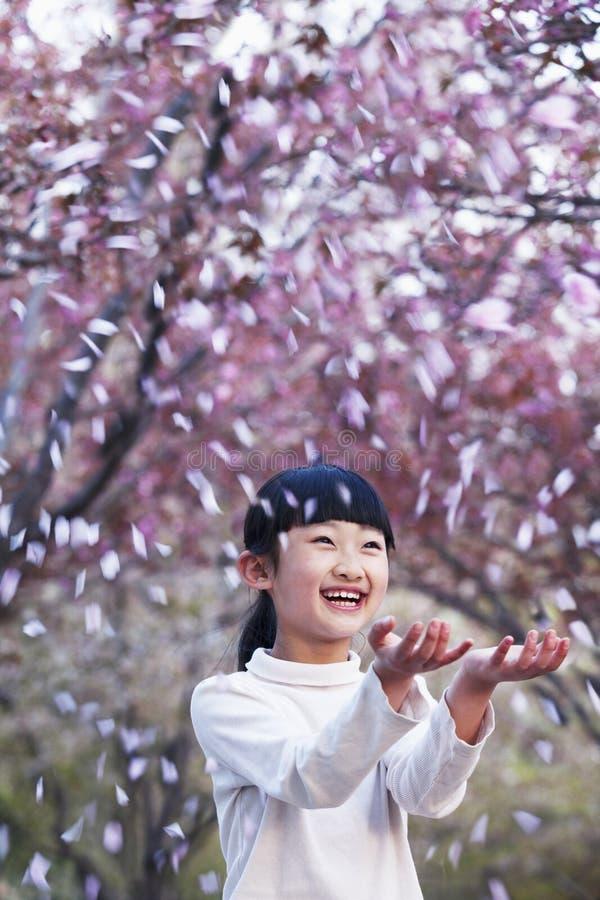 Pétalas de jogo da flor de cerejeira da rapariga feliz no ar fora em um parque na primavera foto de stock
