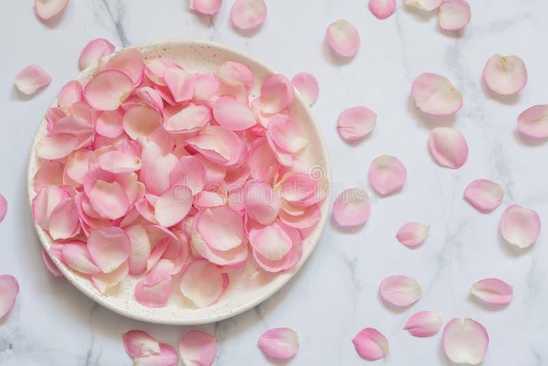 Pétalas de Rosa cor-de-rosa 01 Fundo fotos de stock