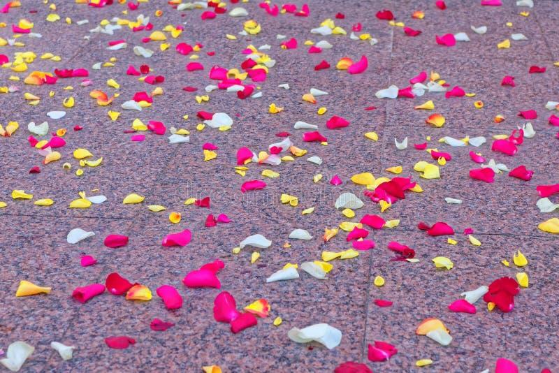 Pétalas de Rosa dispersadas no assoalho imagem de stock royalty free