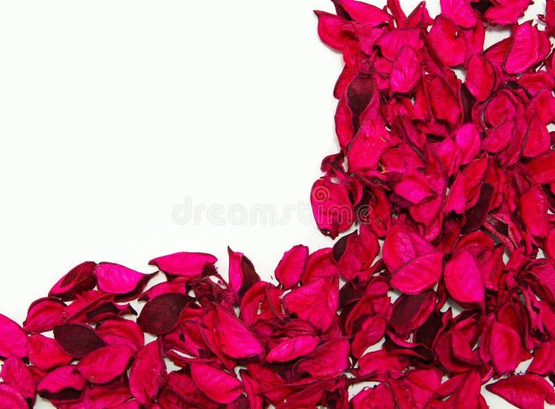 Pétalas de rosas imagens de stock royalty free