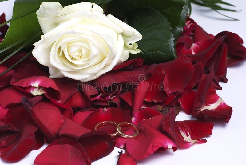 Pétalas e anéis vermelhos imagens de stock royalty free