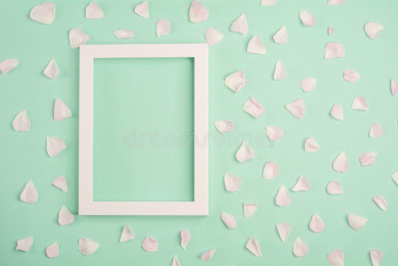 Pétalas e quadro cor-de-rosa da foto no fundo pastel da hortelã fotos de stock