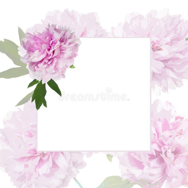 Pétalas roxas da peônia ilustração stock