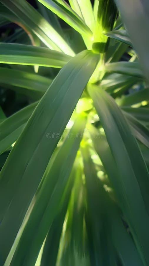 pétalas verdes iluminadas pela foto da natureza dos raios fotos de stock