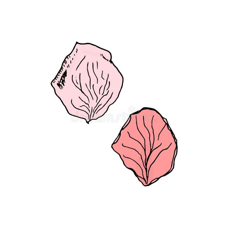 Pétale de rose rose d'isolement sur le fond blanc illustration stock