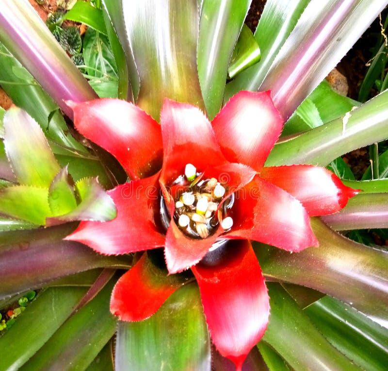 Pétale rouge de fragilité de fleur de feuille images stock