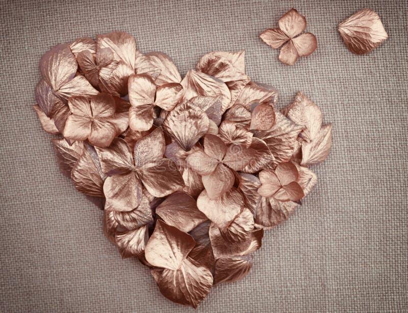 Pétales d'or de fleur d'hortensia de cru sous forme de coeur image stock