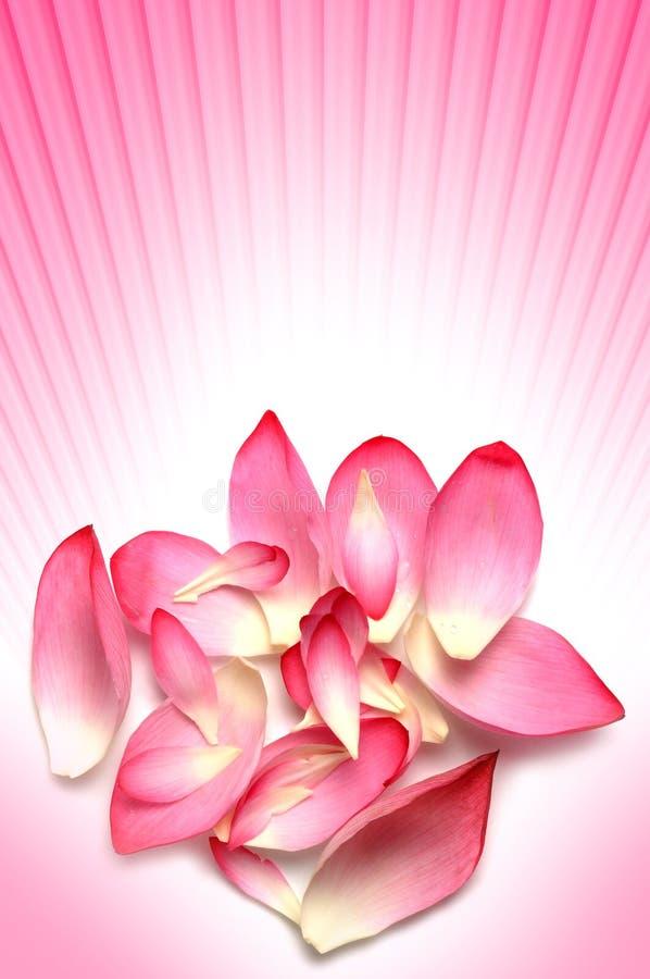 Pétales de fleur photos stock