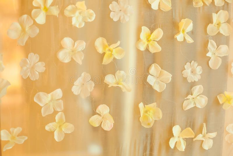 Pétales de fleur blanche épousant le fond de contexte Événement d'occasion spéciale de cérémonie de mariage, concept de décoratio image stock
