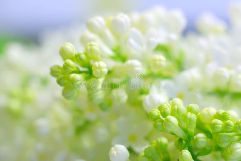 Pétales de fragilité de nature de fleur romantiques photos stock