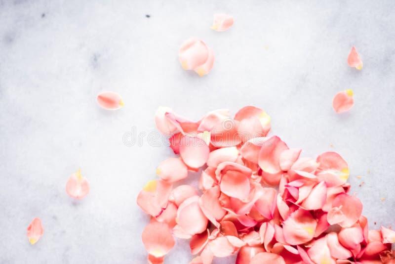 pétales de rose de corail sur le marbre, la couleur de l'année - milieux de fleur, les vacances et le concept floral d'art images libres de droits