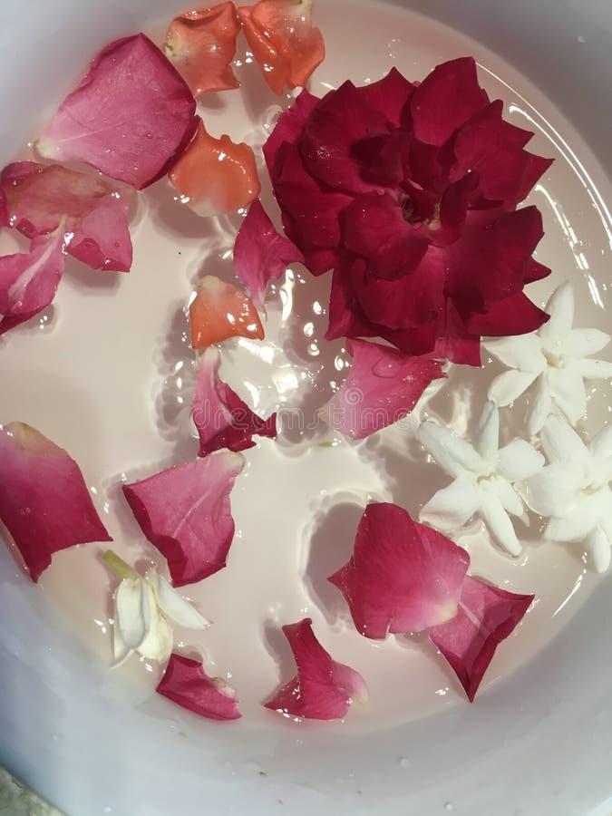 Pétales de rose rouges et jasmins flottant dans la cuvette blanche images stock