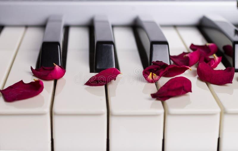 Pétales de rose secs sur un clavier de piano images stock