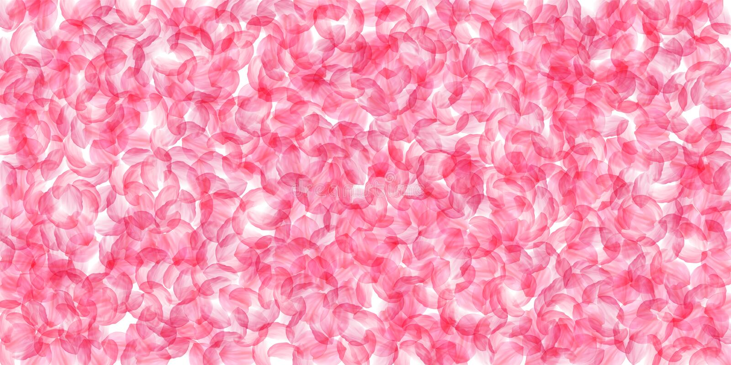 Pétales de Sakura tombant vers le bas Grandes fleurs soyeuses roses romantiques Pétales épais de cerise de vol Scatte large illustration libre de droits