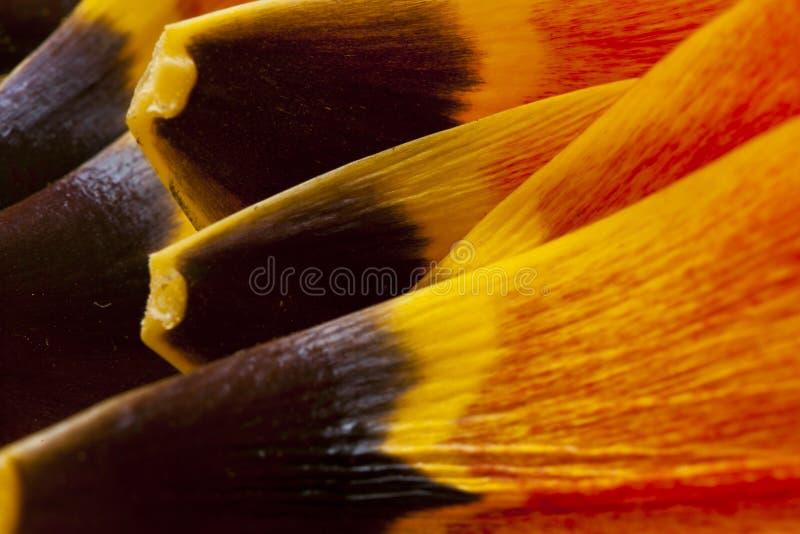 Pétales de tulipe macro photo libre de droits