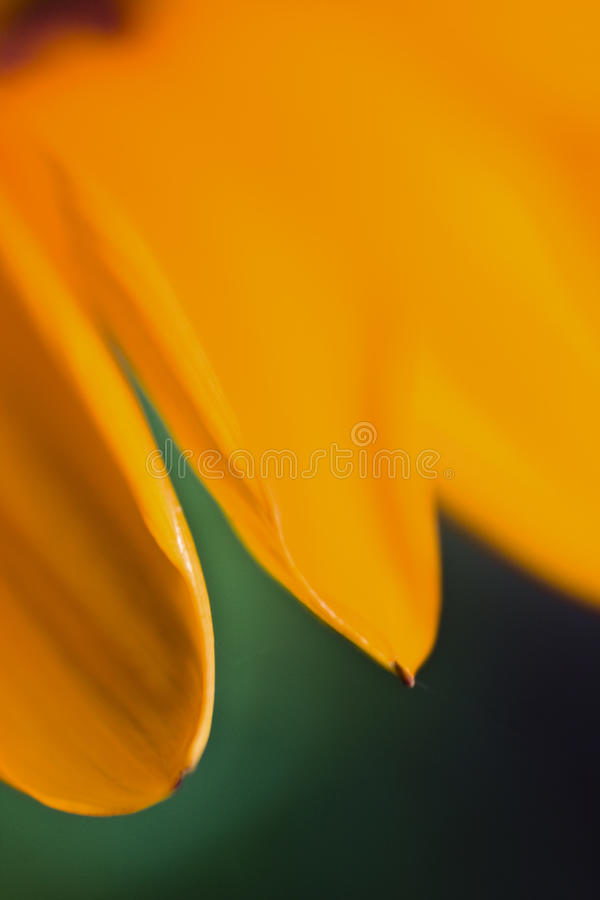 Pétales jaunes de fleur photos libres de droits