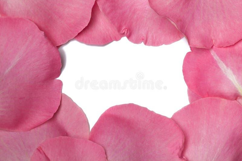 Pétales roses roses image stock