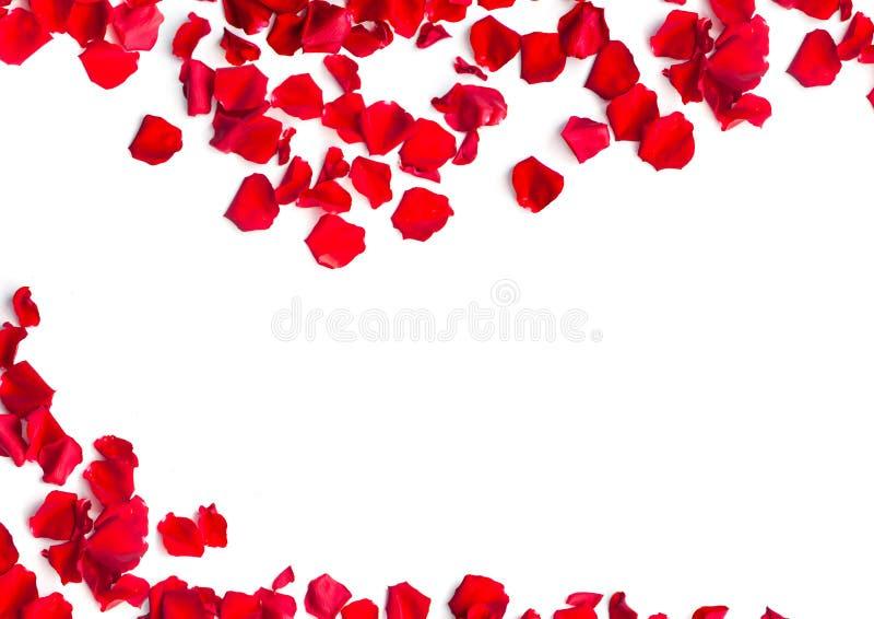 P tales roses rouges sur le fond blanc image stock image du arome fleur 70250091 - Petales de roses sechees ...