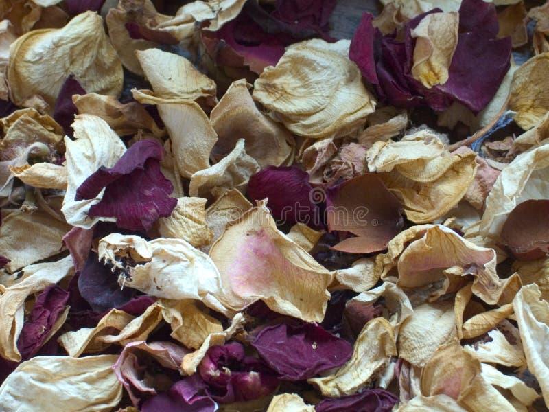 Pétales roses secs image stock
