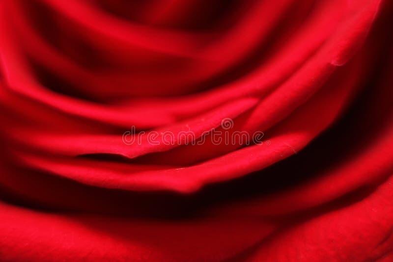Pétales rouges d'une rose images libres de droits