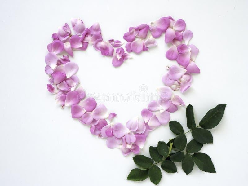 Pétalo de rosas rosado en forma de corazón fotografía de archivo libre de regalías