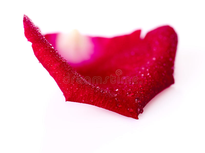 Pétalo de Rose imagen de archivo