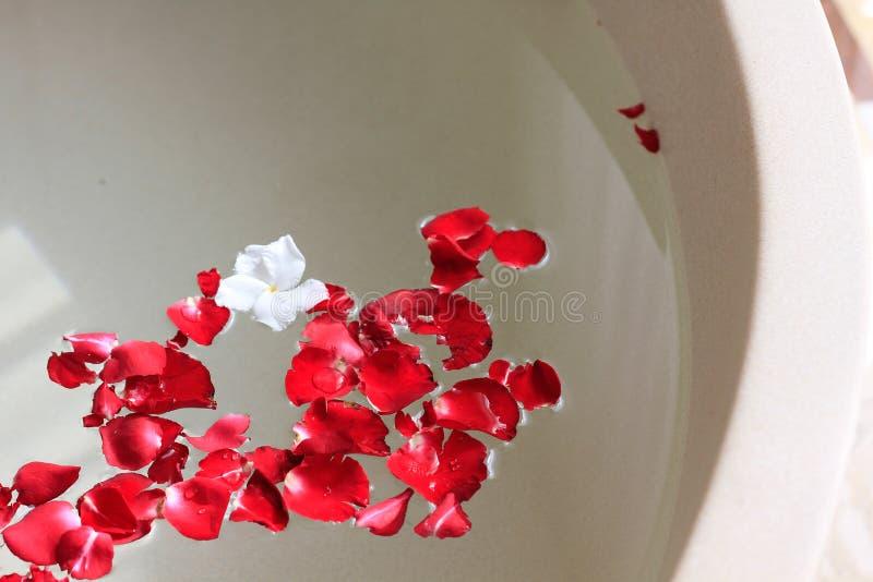 Pétalo de Rose en baño fotos de archivo
