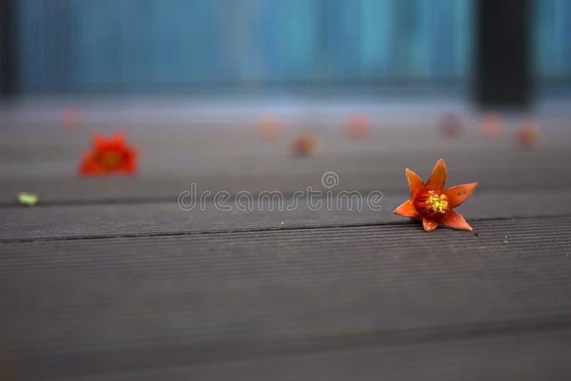 Pétalos caidos en el memery de madera de Œlost del ¼ del floorï foto de archivo libre de regalías