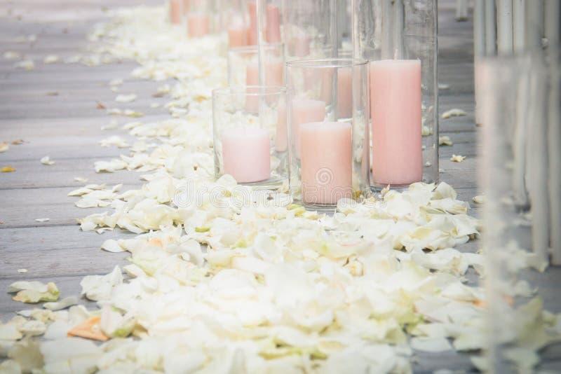 pétalos color de rosa foto de archivo libre de regalías