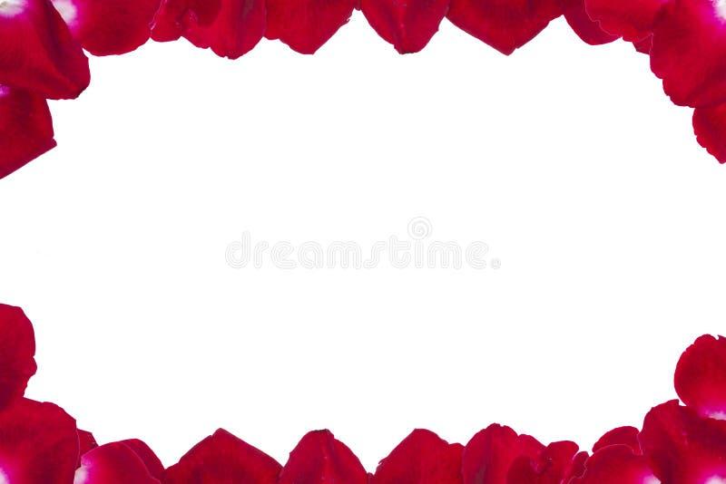 Pétalos color de rosa rojos en el fondo blanco ilustración del vector