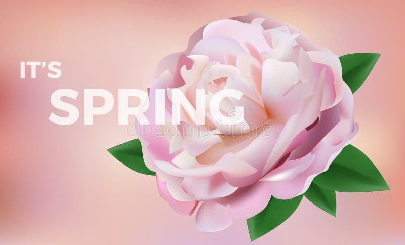 Pétalos color de rosa rosados en color suave fondo del vector del estilo de la falta de definición stock de ilustración